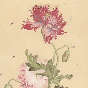 Giấy in hình khổ 26x19cm hoa cúc (8 tờ)